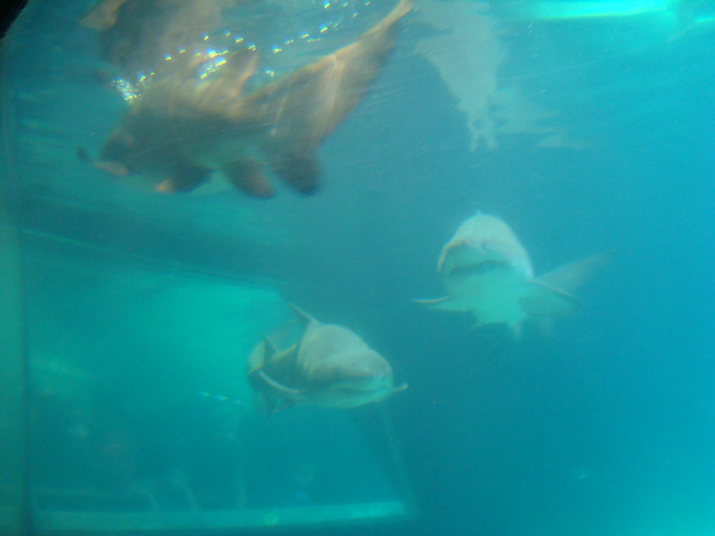 Coney island visit nyc aquarium shark tank the two ks Aquarium in coney island