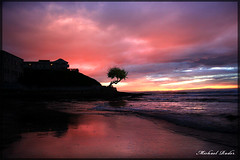 Bonsai Sunset | by Fodo Frog