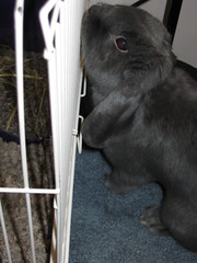 Gunther giving the new bun's house a good chinning! by Muggins' Lover