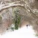 Heaviest snowfall in 20 years