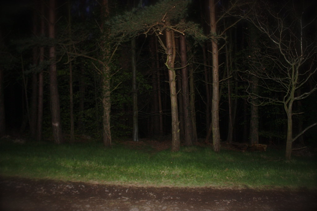 Night-time forest   Le...