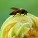 Lucky Bee. Lucky Me.
