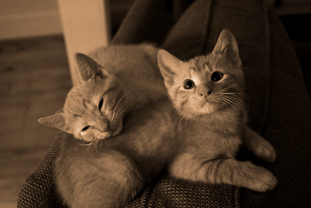 Free Kittens! | anyone in the atlanta area (or clemson ...