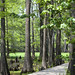 Boardwalk through Cypress | Shangri La Gardens