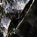 Slimey Rocks