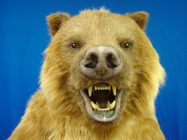 Realistic Grizzly Bear Costume | This animatronic bear ...