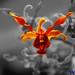 Orchide 2