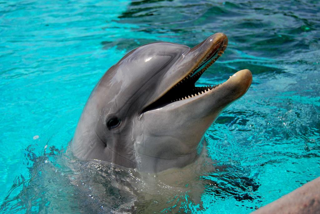 Dolphin   Rooms Espa F Af Ac D
