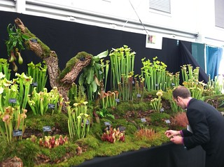 Preparing Carnivorous Plant Display | by RHR Horticulture