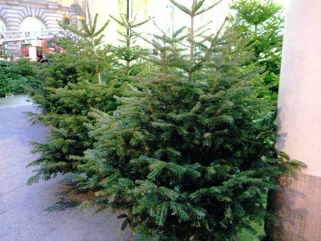 Sale Christmas Trees