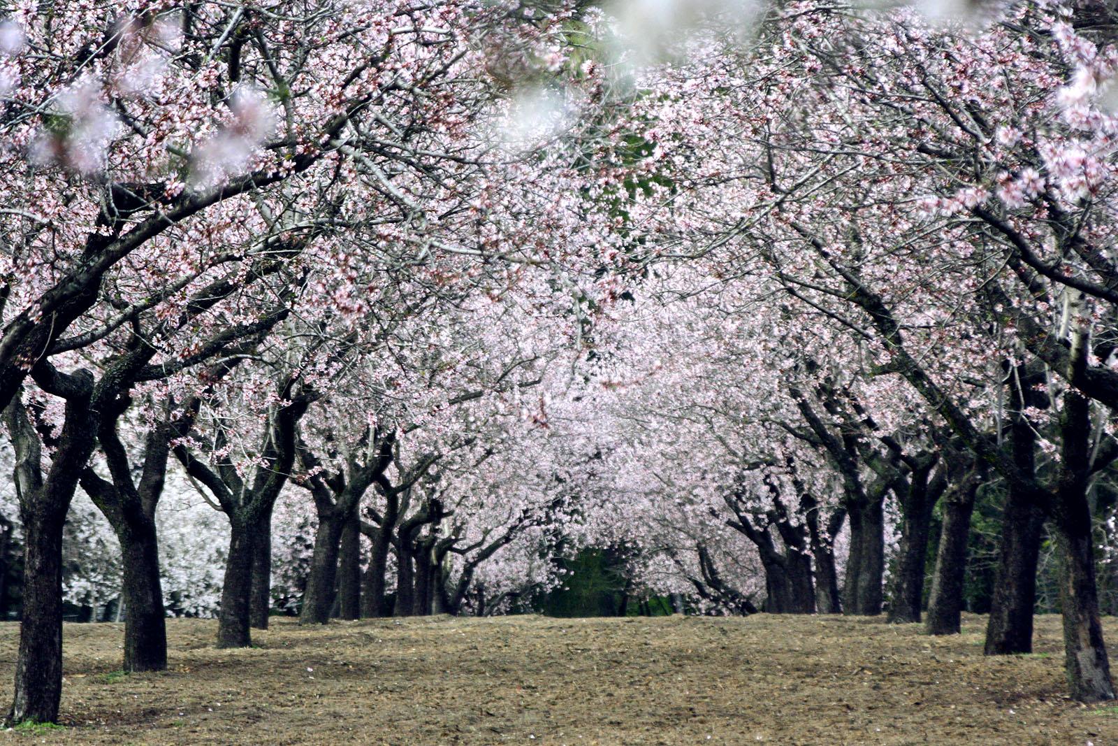 Parque Quinta de los Molinos in spring.