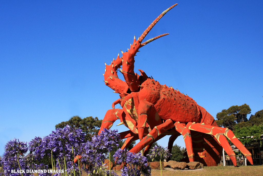 Kingston South East Australia  City new picture : Larry the Lobster' Kingston, South Australia | Copyright ...