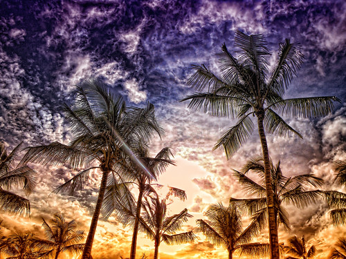 Palms in Paradise | by /\ltus