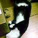 LaZZZZZZy Cat!!