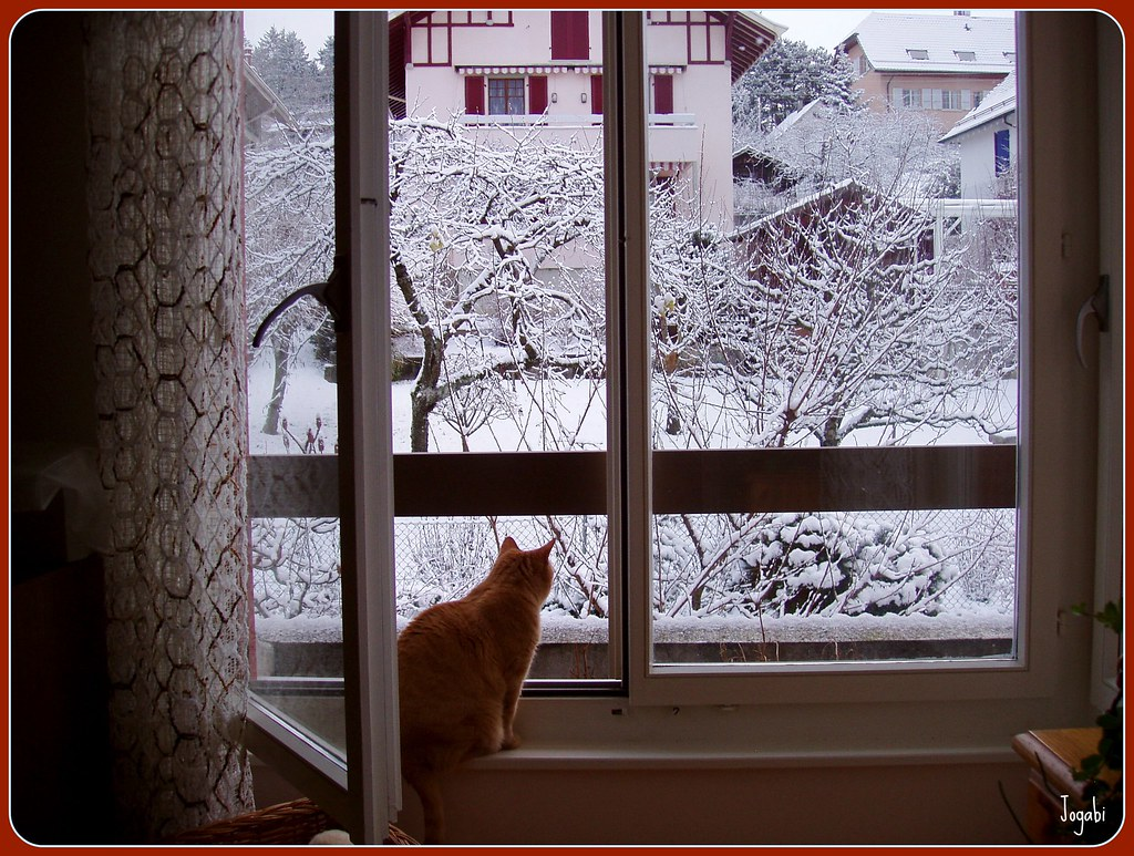 Fenetre ouverte sur la neige il a neig cela ne d range for Fenetre qui s ouvre pas