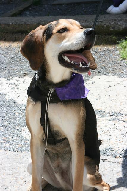 Big Dog Rescue Petaluma