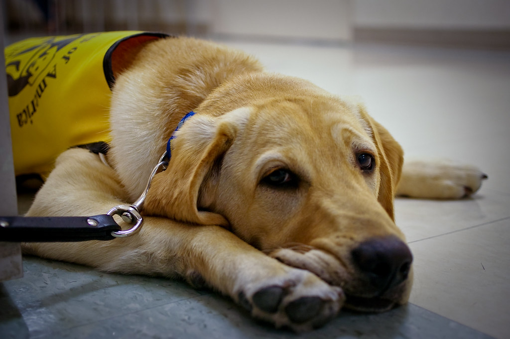 Guide Dog Training Centre Chigwell