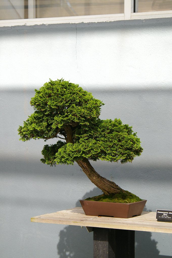 A very small tree bonsai at the brooklyn botanic garden for Very small trees for landscaping