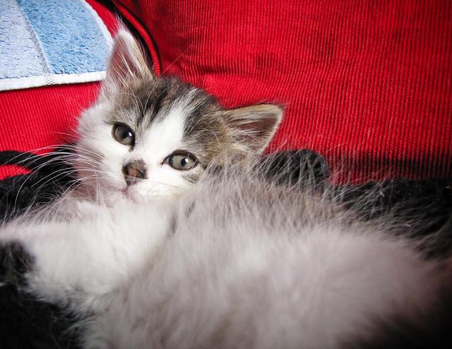 Fuzzy Kitten Games Room Mating Tips