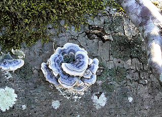 Inlet Drive - Lichen Rose (Cropped, Etc.) | by Vicky TGAW