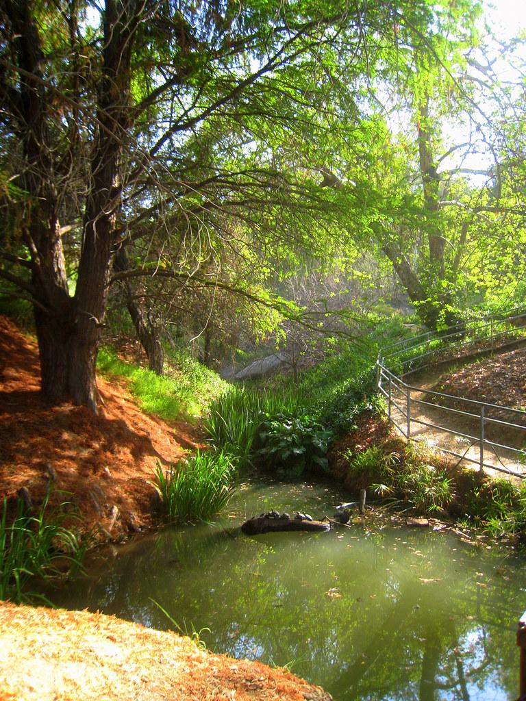Alder Canyon At The Botanical Gardens Of U C Riverside Flickr