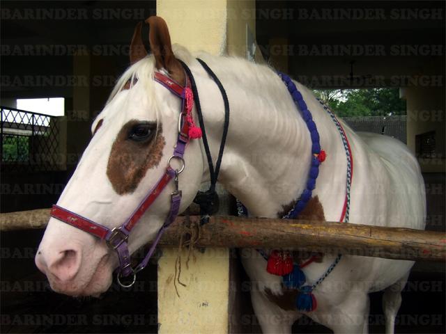 Guru Gobind Singh on Horse Guru Gobind Singh ji 39 s