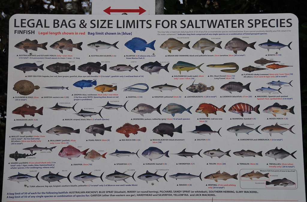 Fish size chart fl all the best fish in 2018 for Best time to fish today
