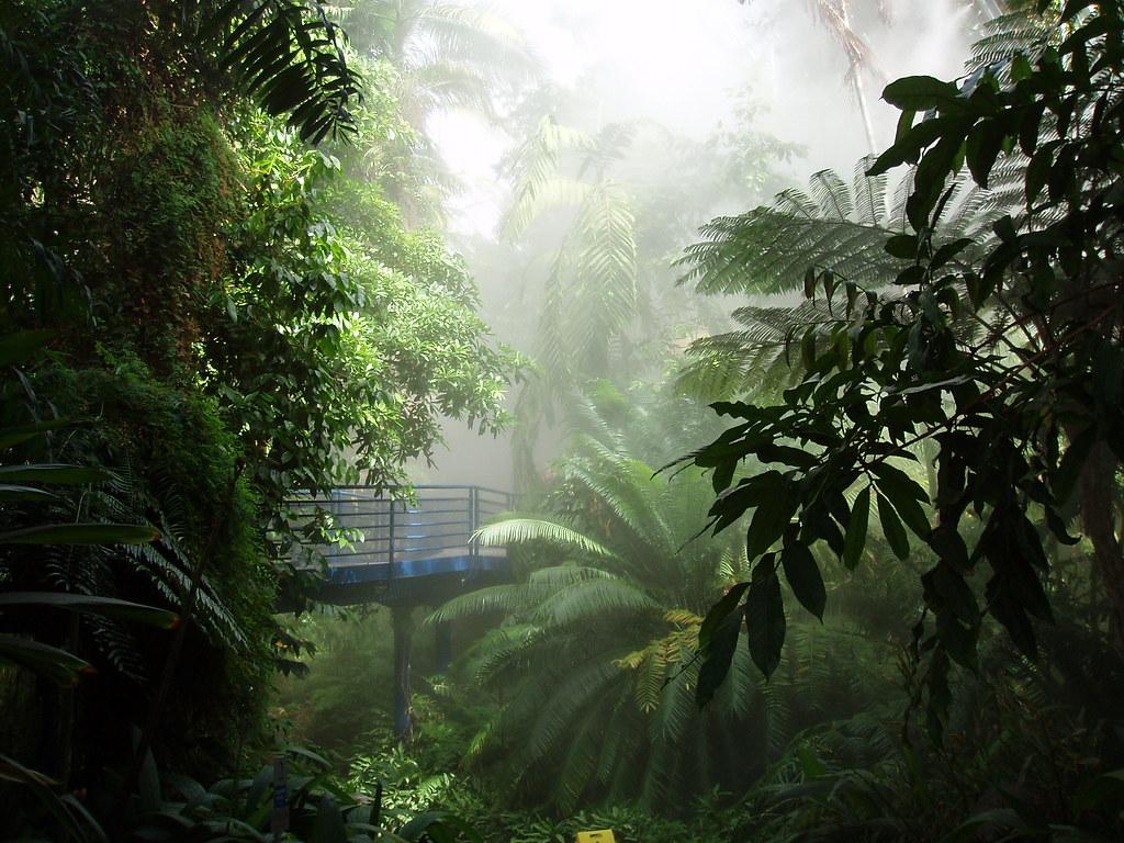 Bicentennial conservatory adelaide botanic gardens sa for Landscape design jobs adelaide