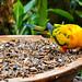 Taman Burung Kuala Lumpur - Eat
