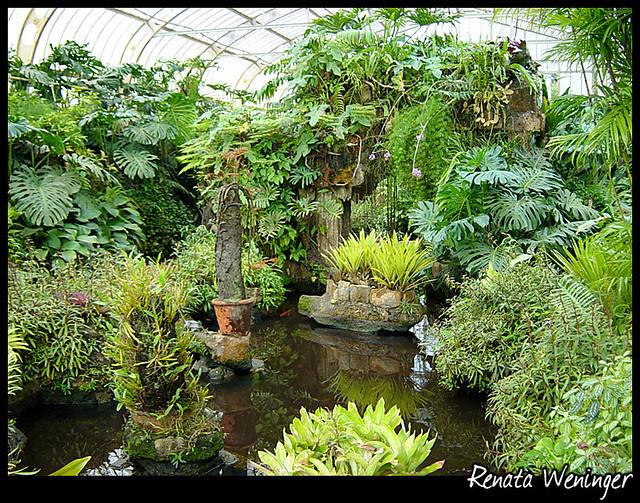 plantas tropicais - estufa Jardim Bot?nico - SP Renata ...