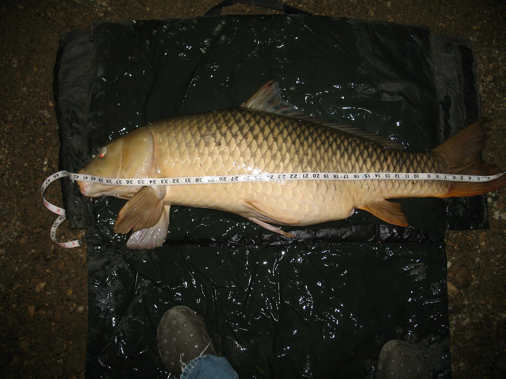 Rod 39 s pb common at 42 inches what a long fish at 42 for How long is fish good for
