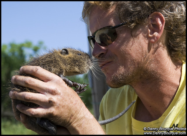 #0629 Baby Nutria | Wh...