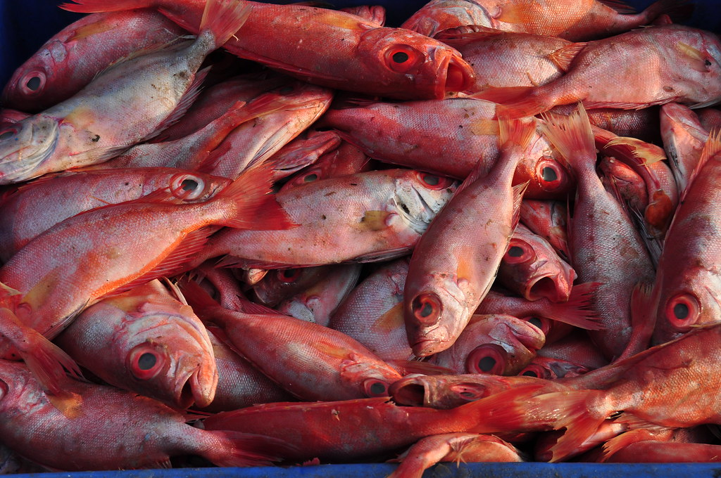 Image gallery spoiled fish for How long does fish oil stay in your system