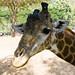 December 15 Khao Kheow Open Zoo - 2