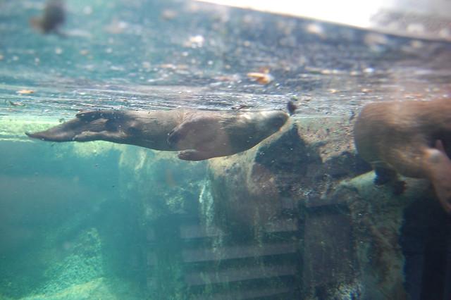 Virginia Aquarium Flickr Photo Sharing
