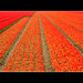 Orange and Red:  Angles and Lines