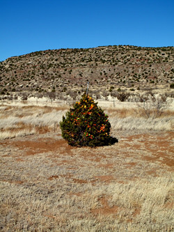 White christmas decorations - The Desert S Christmas Tree A Tree With Christmas Decorati