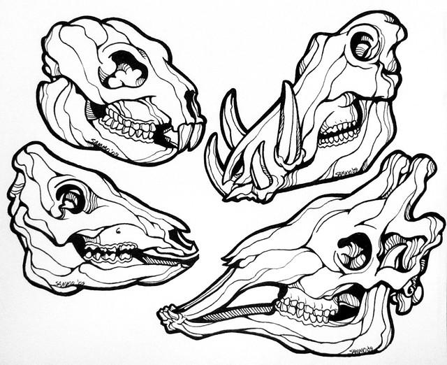 animal skulls line art i m tentatively thinking about havi flickr
