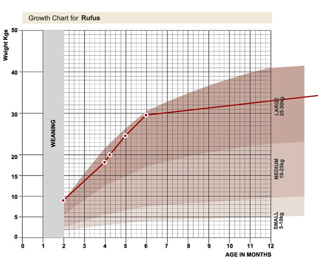 Standard Growth Charts Ibovnathandedecker
