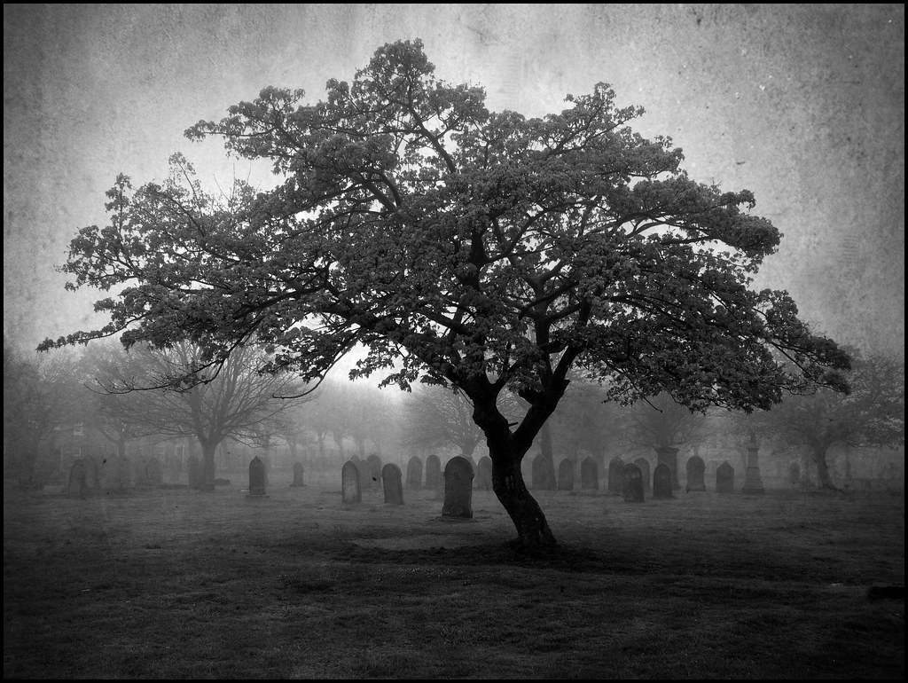 The Graveyard Tree | Davy Ellis | Flickr