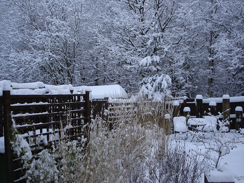 Snow 2009 | by DaveLevy