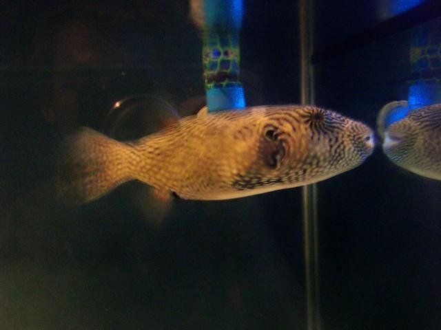 Mactan Island Aquarium Flickr - Photo Sharing!