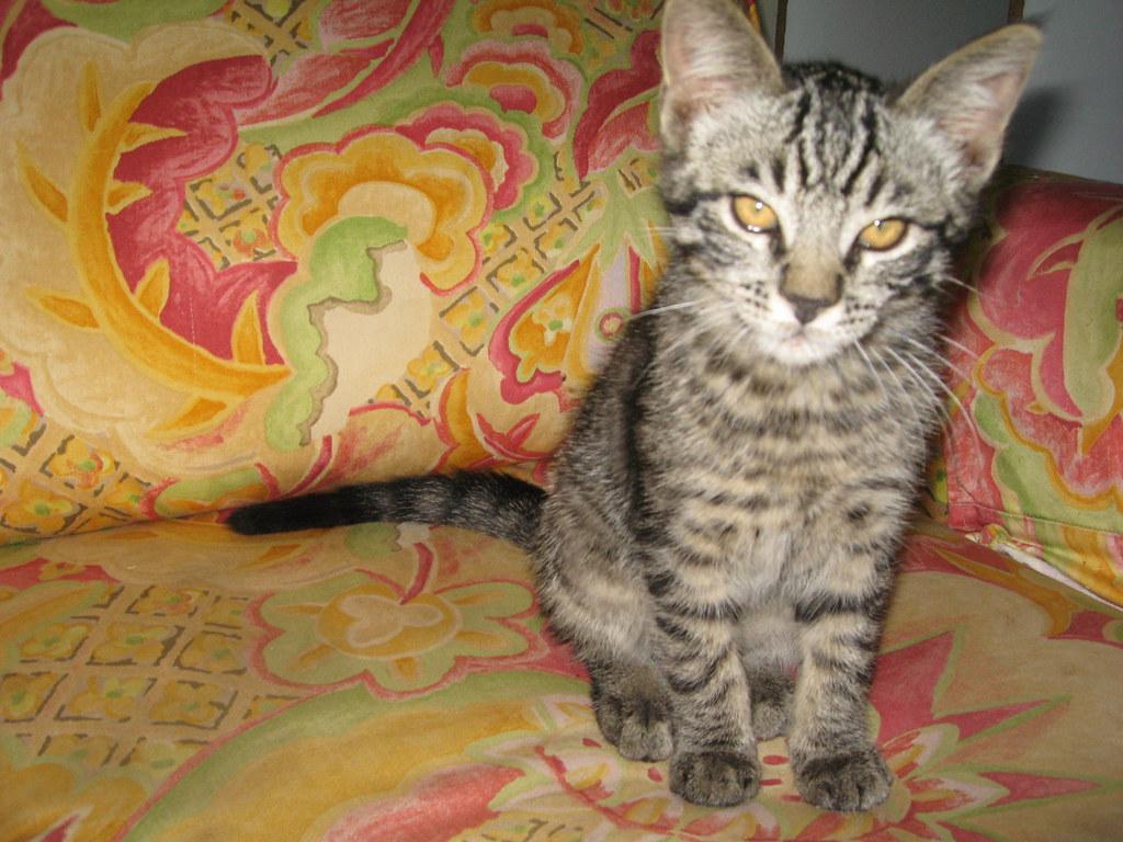 Jayson 39 S Sweet Kitten Calypso Big Sur Spirit Garden