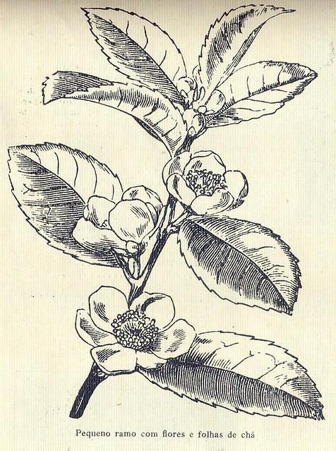 Ilustração, No. 6, Março 16 1926 - 19a