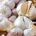 Garlic group Shots 7
