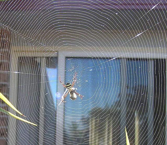 Spider's Sweet Home | Dr. Umesh Behari Mathur | Flickr