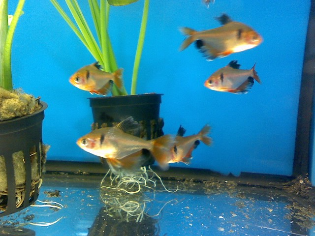 Walmart fish pt 2 meg myers flickr for Walmart fish finder