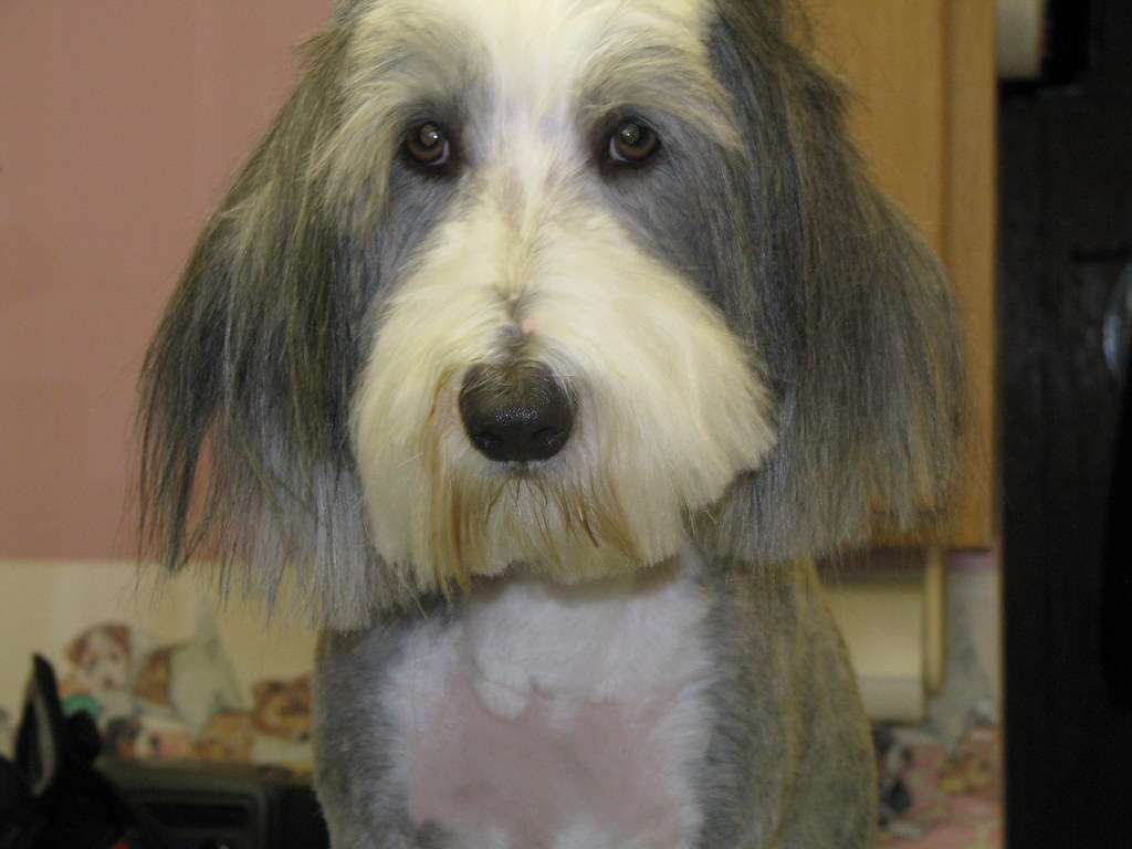 Mobile Dog Grooming Nj Sussex County