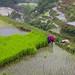 centuries old farming