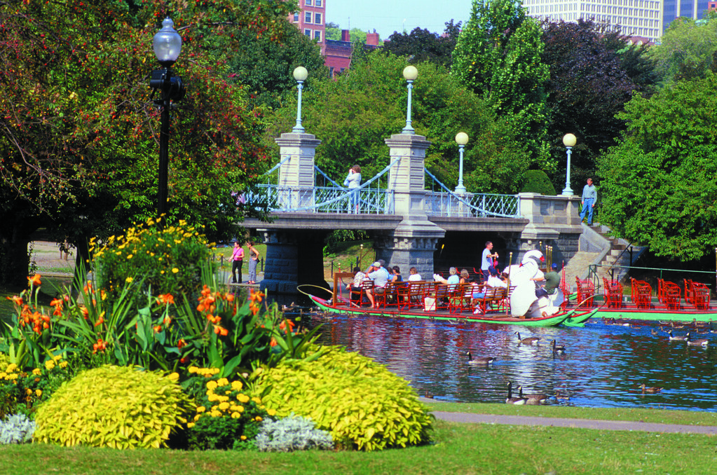 swan boats in boston public garden original size 11 0 x. Black Bedroom Furniture Sets. Home Design Ideas